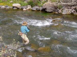 catching trout fightingtown creek