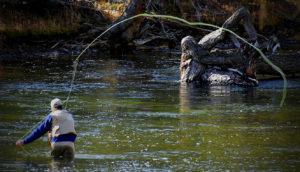 blue ridge trout fishing