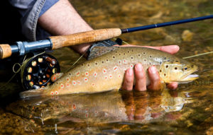 rainbow trout in river