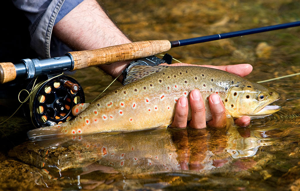 Guided Trout Fly Fishing Excursions in the GA & NC Mountains