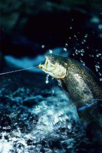 trout fishing north georgia