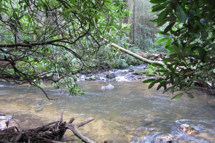noontootla creek trout