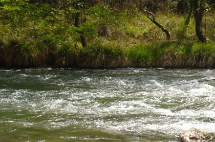 tuckasegee river trout