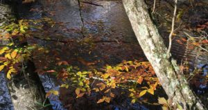 hemptown creek trout